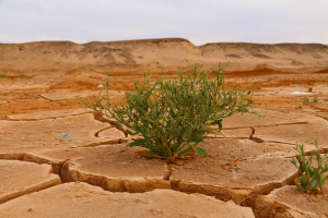 Kirchen starten neues Klimaschutzprojekt