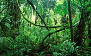 Bischöfe: Amazonien geht auch uns in Österreich etwas an