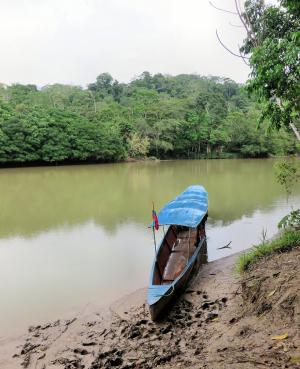 Österreichs Bischöfe besorgt über Gewalt in Amazonien